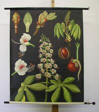 Sublime Tableau Mural Jkq Châtaigne Cheval Chestnut 83x112 ~1969 Vintage Plants