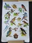 VINTAGE OUT OF PRODUCTION POSTER - U. S. FOREST SERVICE SMOKEY THE BEAR - BIRDS