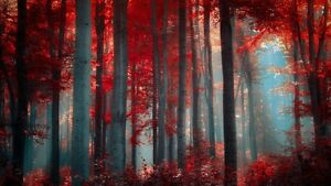 Red Trees, Forest wall art poster Choose your Size