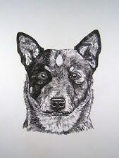 Australian Cattle Dog Queensland Heeler - Orig. Vtg Pen & Ink Drawing