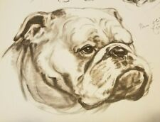 BULLDOG Dog DIANA THORNE Animal Artist Vintage Print 1944
