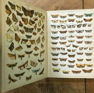 Our Country's Butterflies and Moths WJ Gordon Circa 1900 Colour Plates