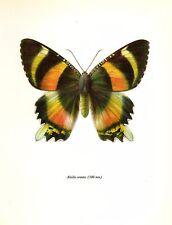 Antique MOTH Print Alcidis Orontes Moth Art Insect Print Orange Black Moth #2170