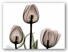 BOTANICAL ART PRINT Trio of Tulips II Albert Koetsier