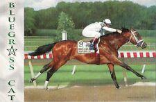 Postcard Horse Racing Blugrass Cat Haskell Invitational 2006 WinStar J Velazquez