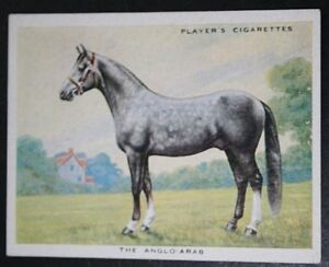 ANGLO ARAB HORSE      Vintage Illustrated Card   VGC