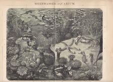 1893 MEERWASSER AQUARIUM Original alter Druck Antique Print Lithographie Fische