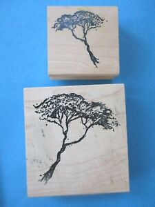 2 ACACIA TREES Rubber Stamps ART IMPRESSIONS Branches