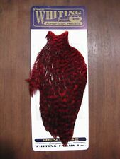 Fly Tying Whiting American Hen Cape Grizzly dyed Red #A