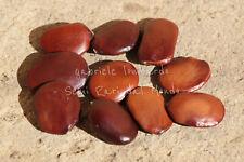 ALBERO DELLE ORCHIDEE ROSSE - BAUHINIA GALPINII, 10 SEMI