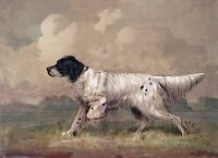 "English Setter, Bird Dog, antique Art, H. Brencke, 1877, 20""x16"" Canvas Art"