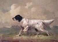 "English Setter, Bird Dog, antique Art, H. Brencke, 1877, 14""x10"" Art Print"