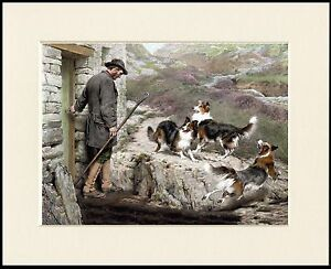 BORDER / ROUGH COLLIE DOGS AND SHEPHERD DOG ART PRINT MOUNTED READY TO FRAME