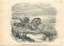 Gnous au Cap de Bonne-Espérance Afrique du Sud GRAVURE ANTIQUE OLD PRINT 1838
