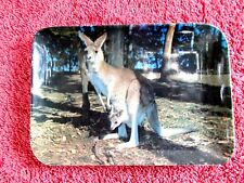 AUSTRALIAN   SOUVENIR  KANGAROO &  JOEY MELAMINE   MINI  TRAY 15cm.X 10cm.