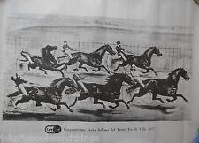 CINQUANTESIMO DERBY ITALIANO TROTTO TOR DI VALLE 1977 CORSA CAVALLI HORSE RACING