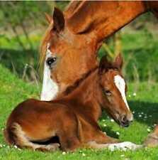 Serviette PAP STAR - Horses (33 x 33 cm)