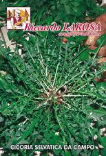 CICORIA SELVATICA DA CAMPO  semi/seeds