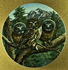 Vast View: Saw-Whet Owls Plate Under Mother's Wing #5 Jim Beaudoin Owl & Chicks