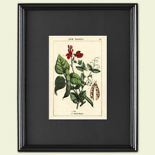Vintage Grabado Botánico hortícolas victoriana arte Sketch Poster A3 No. 4