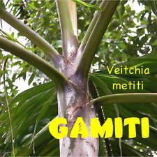 New listing ~Gamiti Palm~ Veitchia metiti 25 Seeds Vanuatu Rainforest Elegant Rare Palm Seed