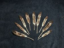 Eagle, Hawk, Owl Turkey, Feather 24 pcs. hand painted   GOLDEN EAGLE