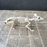Skeleton Rat Plastic Animal Skeleton Bones for Horror Halloween Decor TwJ bv