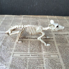 Skeleton Rat Plastic Animal Skeleton Bones for Horror Halloween Decor KQ