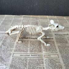 Squelette de rat plastique animal squelette OS pour horreur Halloween décor