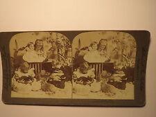 The Children's Pets - 1894 - Mädchen Junge Hase ? Kaninchen ? / Stereofoto