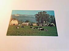 Farm Scene, Chilliwack British Columbia Canada Postcard Circa 1960