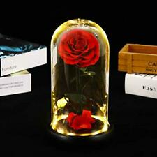 Beauty and The Beast Rose,Preserved Real Rose That Lasts Forever in a Glass Dome