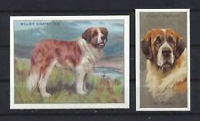 1915 - 1940 UK Reissue Reproduction Dog Art Cigarette Card 2 SAINT BERNARD DOG