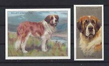 1915 - 1940 UK Reissue Reproduction Dog Art Cigarette Card 2 SAINT BERNARD DOG