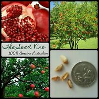 20+ POMEGRANATE TREE SEEDS (Punica granatum) Super Fruit Edible Decoration Sweet