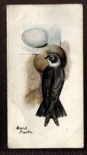 Tobacco Card, Lambert Butler, BIRDS EGGS, 1906, Sand Martin, #9