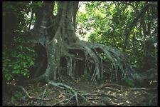 311094 Mangrove Roots A4 Photo Print