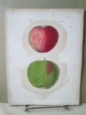 Vintage Print,APPLE,HALLS PIPPIN,Holland Pippin, Natural History NY,1851