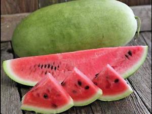 """Watermelon Seeds """"Charleston Grey"""" (15 Seeds) Excellent Variety"""