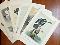 Authentic Audubon Octavo Editions, Hand Colored Lithographs (Varying Editions)