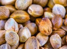 Organic HempSeed Premium Natural Field Plant Supplements Vegan
