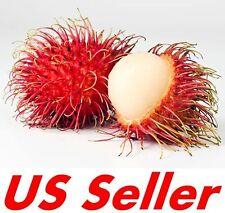 5 PCS Seeds of Rambutan Fruits E51, Tropical Fruit Nephelium lappaceum Lychee