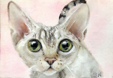 print Aceo Kitty Cat Devon Rex kitten Intense Stare 2 cat kitten animal Atc pet