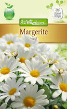 40x Chrysanthemum indicum li flores plantas-semillas #54
