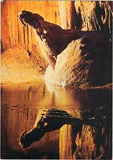 30 - cpsm - SAINT AMBROIX - Grotte La Cocalière - Le phoque