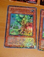 YUGIOH JAPANESE SUPER RARE HOLO CARD CARTE DT08-JP031 Naturia White Oak JAPAN M