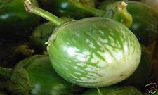 100 FRESH THAI GREEN ROUND EGGPLANT VEGETABLE SEEDS