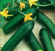 100 Japan Cucumber Seeds Easy to Plant Heirloom Organic Vegetable Seeds 1
