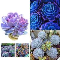 100pcs/bag Succulents Fleshier Seeds Rare Indoor Flower G8S6 Plant Fleshier B4W4