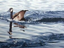 "Dallas John ""Canada Goose - Water Study"" Hand Signed Ltd Ed Art Serigraph OBO"